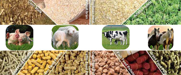 Myanmar Animal Feed Demand still Growing at Healthy Clip